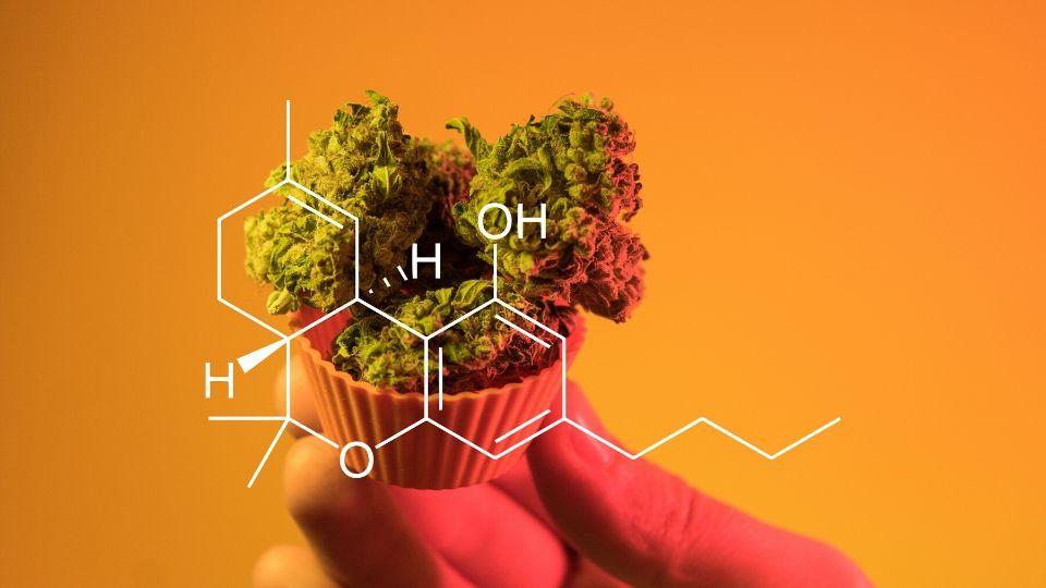 marihuanos priklausomybė